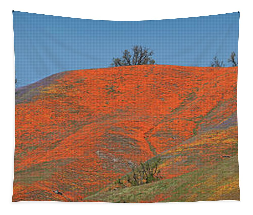 Spring Tapestry featuring the photograph An Ocean Of Orange On The Mountain Top by Lynn Bauer