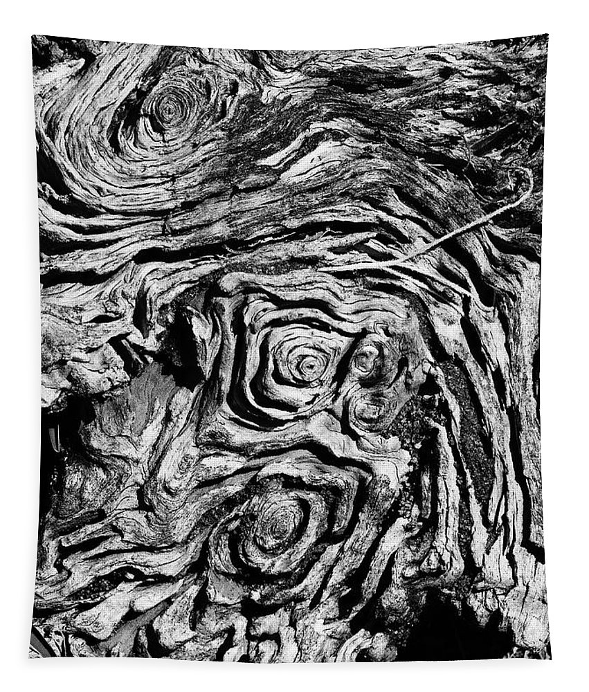 Tree Tapestry featuring the photograph Ancient Stump by Christopher Holmes
