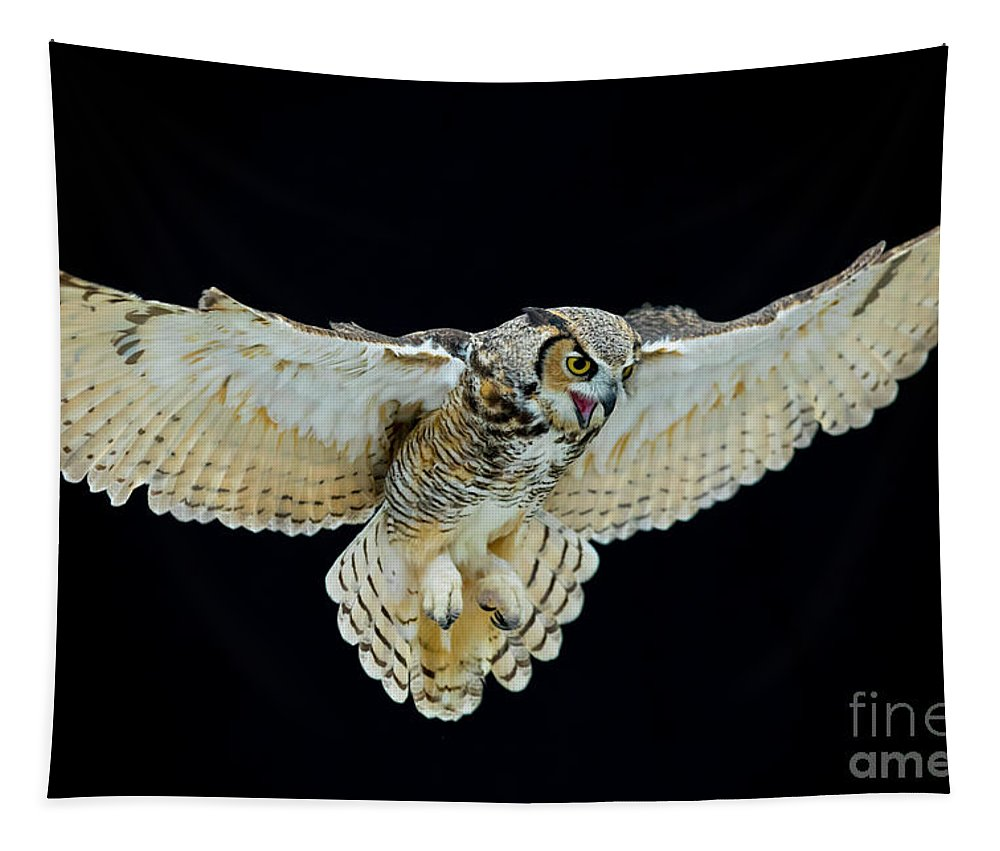 Owl Tapestry featuring the photograph Animal - Bird - Great Horned Owl Wings Spread by CJ Park