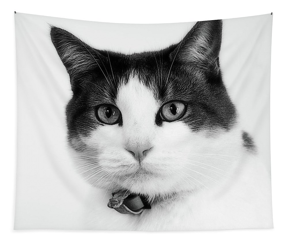 Animals Tapestry featuring the photograph Animals 92 by Ben Yassa