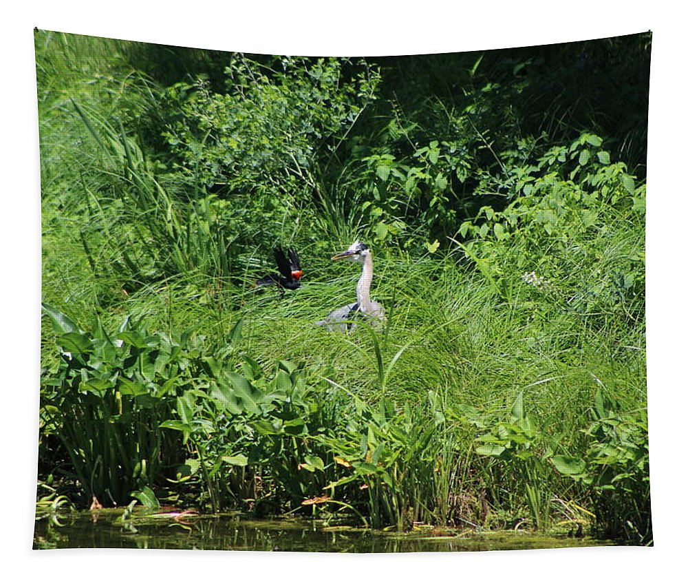 Marsh Tapestry featuring the photograph Annoyed - Heron and Red Winged Blackbird 5 of 10 by Colleen Cornelius