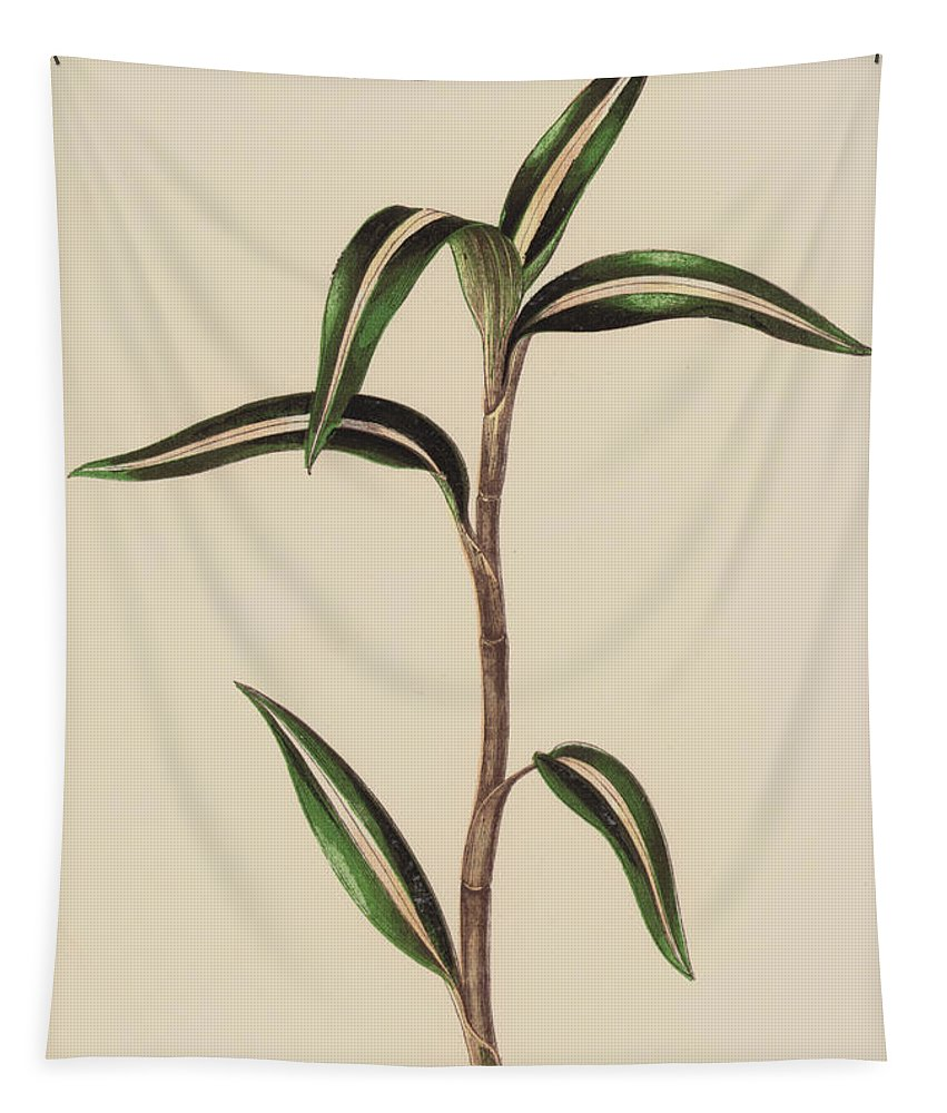 Leaf Tapestry featuring the painting Anoectochilus Striatus by English School