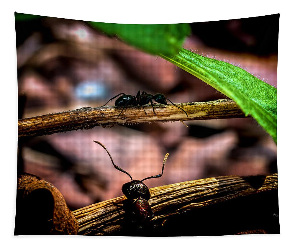 Ant Tapestry featuring the photograph Ants Adventure by Bob Orsillo