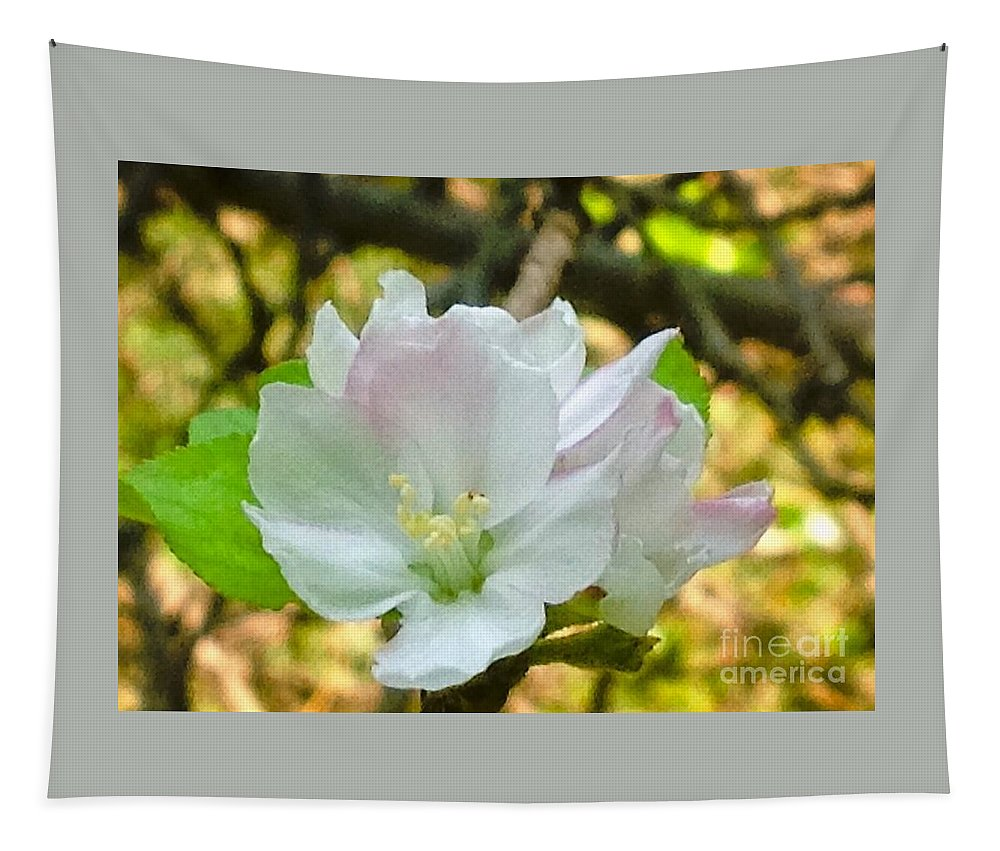 Apple Tapestry featuring the photograph Apple Blossom Close-up by Debra Lynch