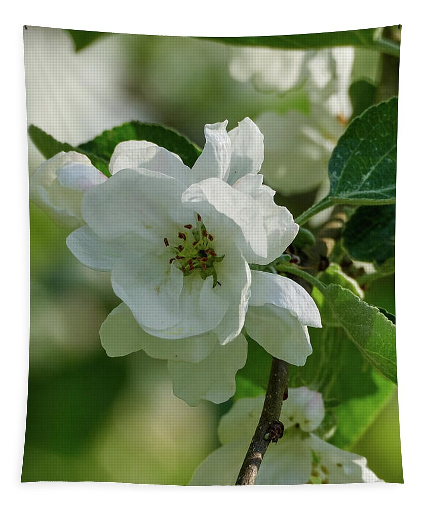 Finland Tapestry featuring the photograph Apple Flowers by Jouko Lehto