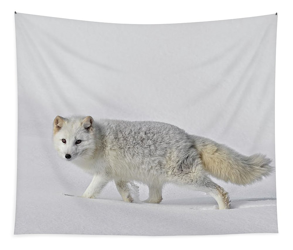 Arctic Fox In Winter Tapestry featuring the photograph Arctic Fox In Winter by Wes and Dotty Weber