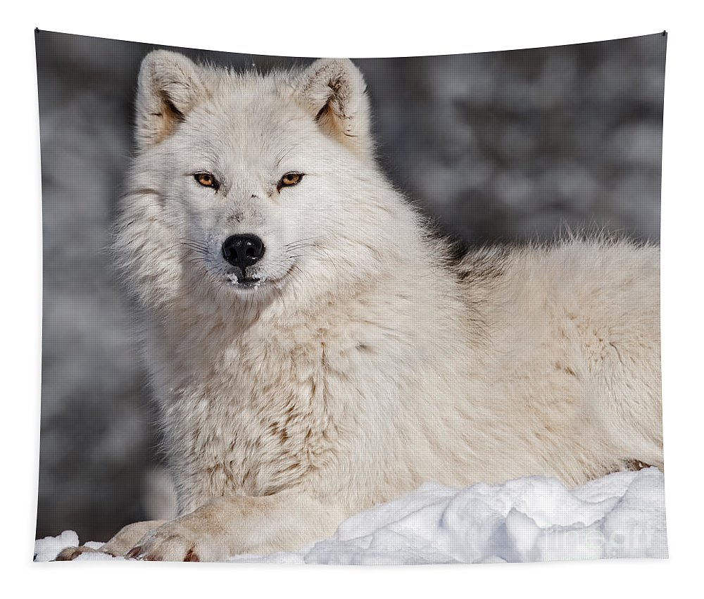 Nina Stavlund Tapestry featuring the photograph Arctic Wolf... by Nina Stavlund