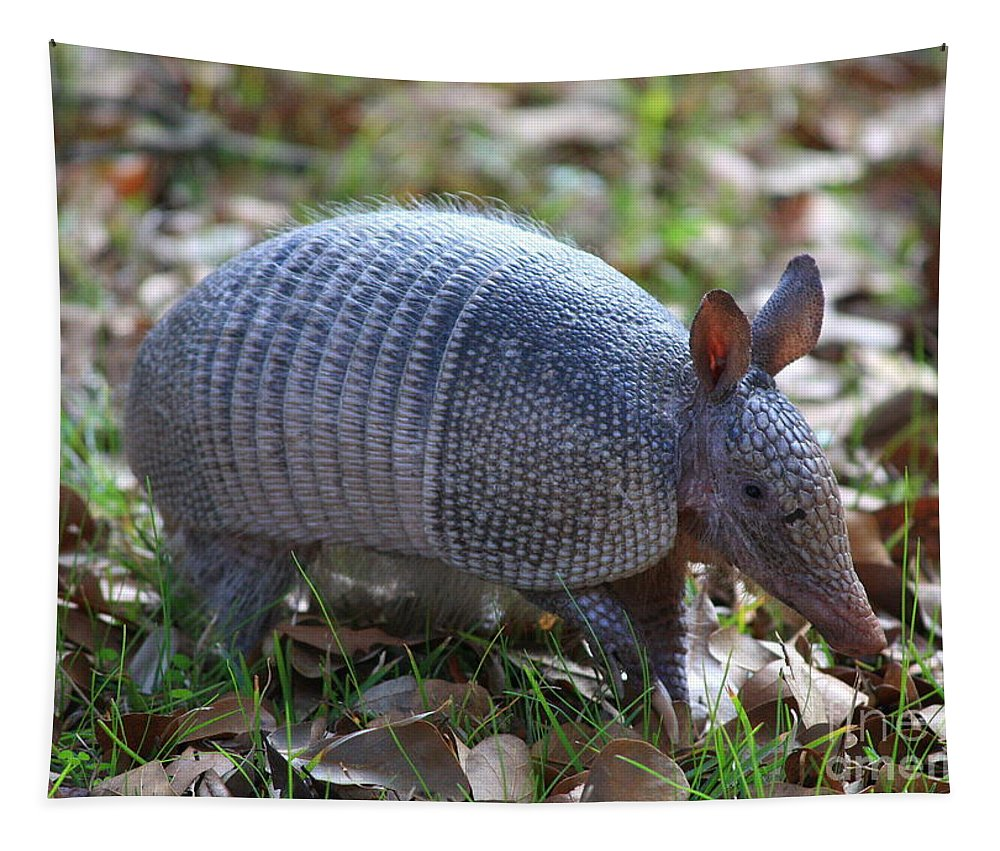 Armadillo Tapestry featuring the photograph Armadillo by Carol Groenen