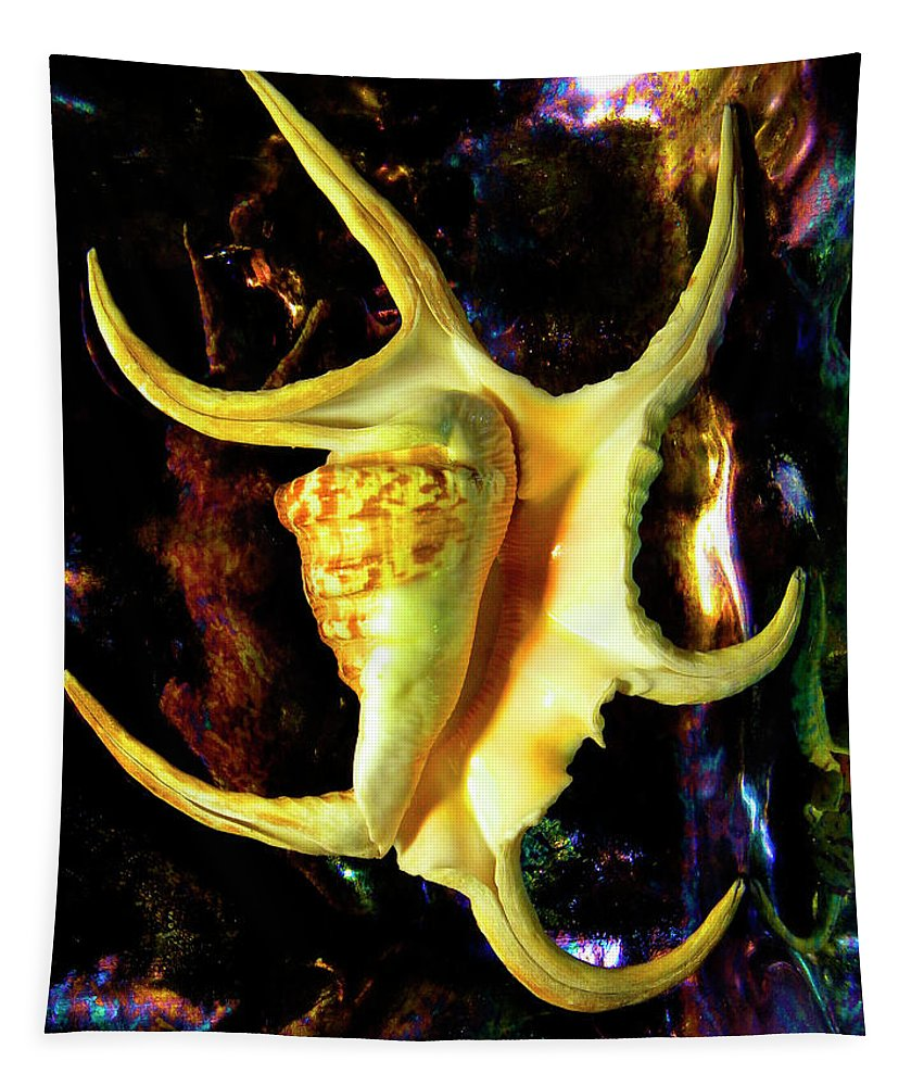 Frank Wilson Tapestry featuring the photograph Arthritic Spider Conch Seashell by Frank Wilson