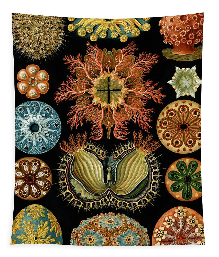 Haeckel Tapestry featuring the painting Ascidiae by Ernst Haeckel