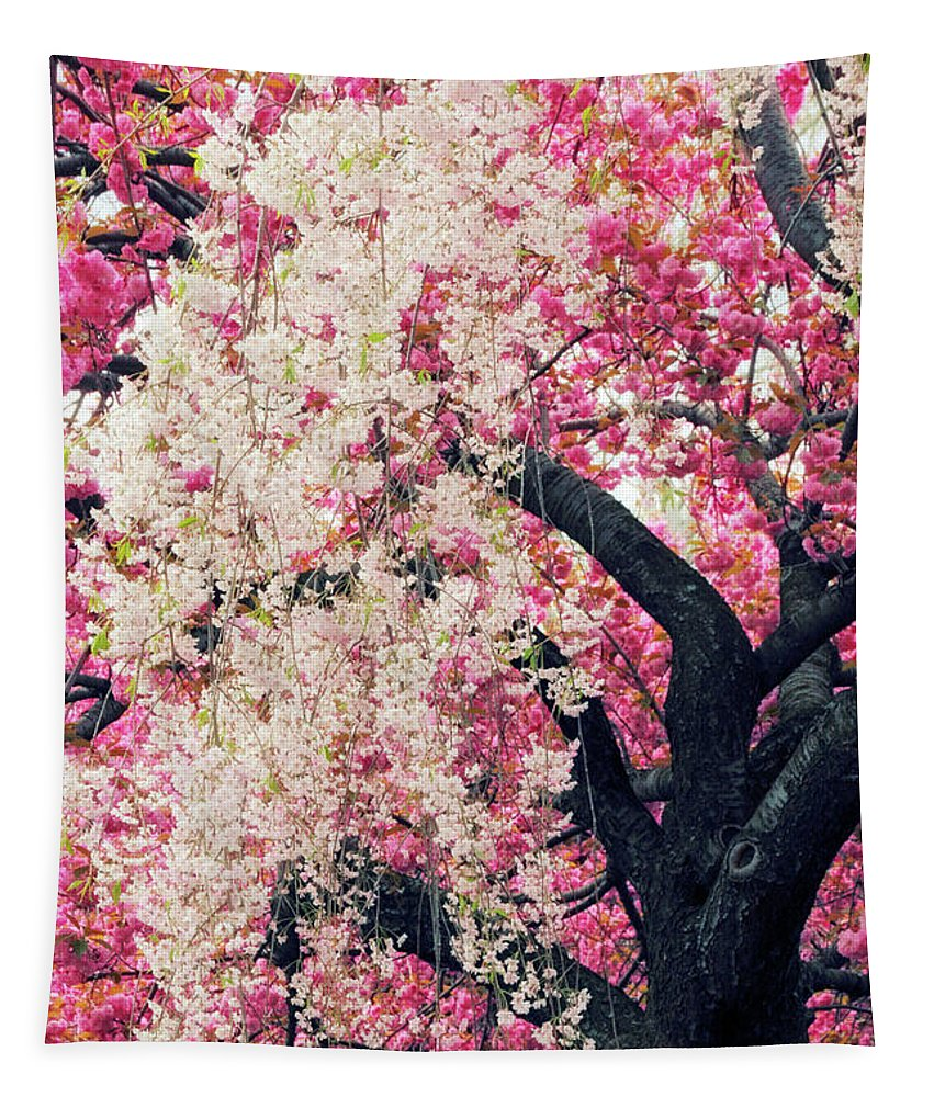 Cherry Tree Tapestry featuring the photograph Asian Cherry Vignette by Jessica Jenney