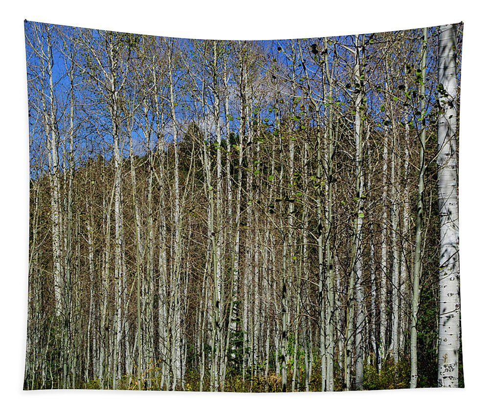 Trees Tapestry featuring the photograph Aspen Forest by Tikvah's Hope