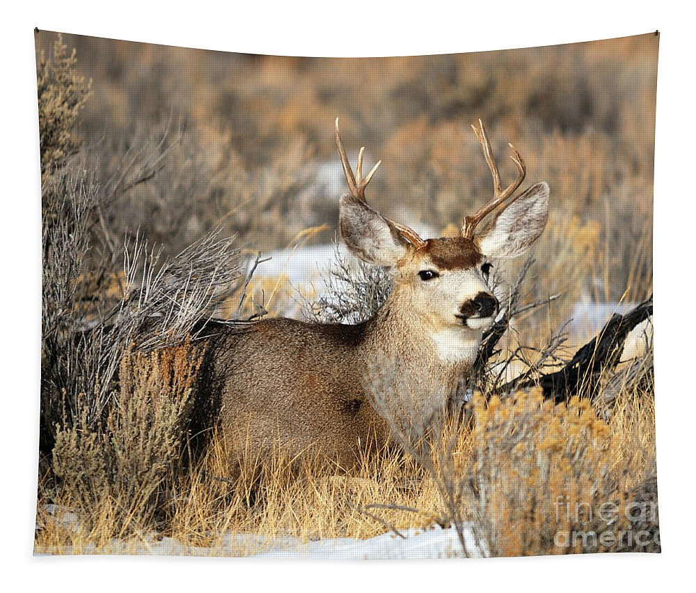 Mule Tapestry featuring the photograph At Rest by Brad Christensen
