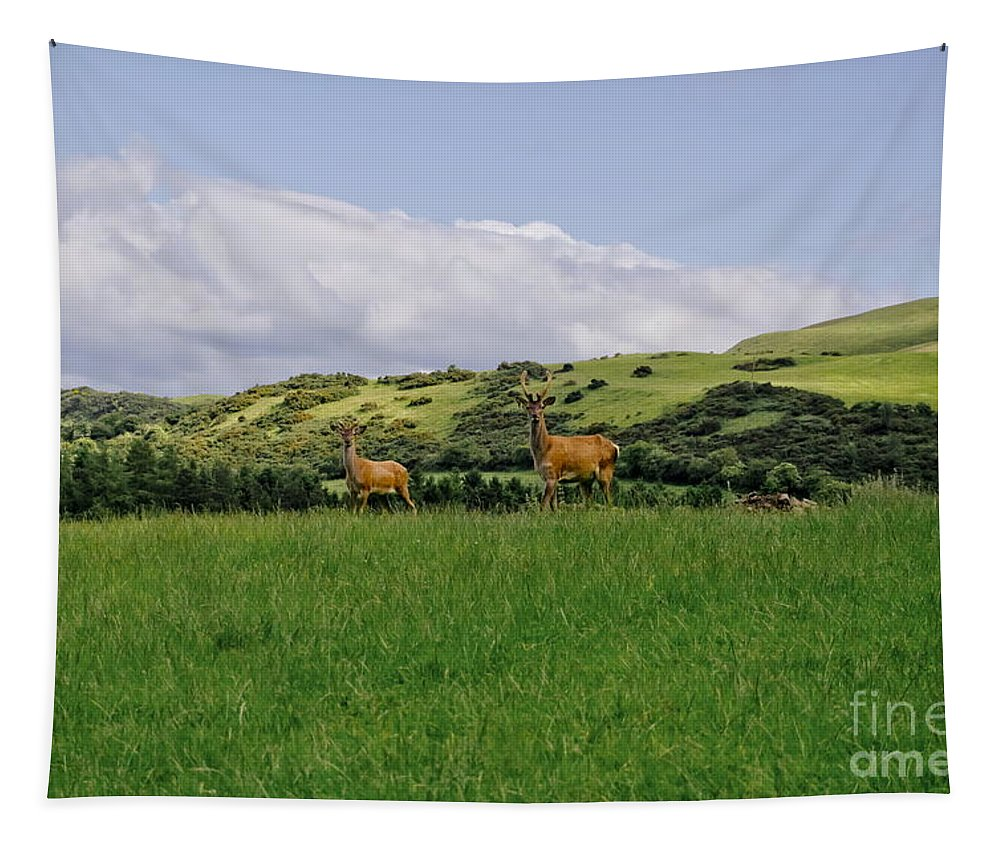 Beecraigs Tapestry featuring the photograph At The Hill Bottom. by Elena Perelman