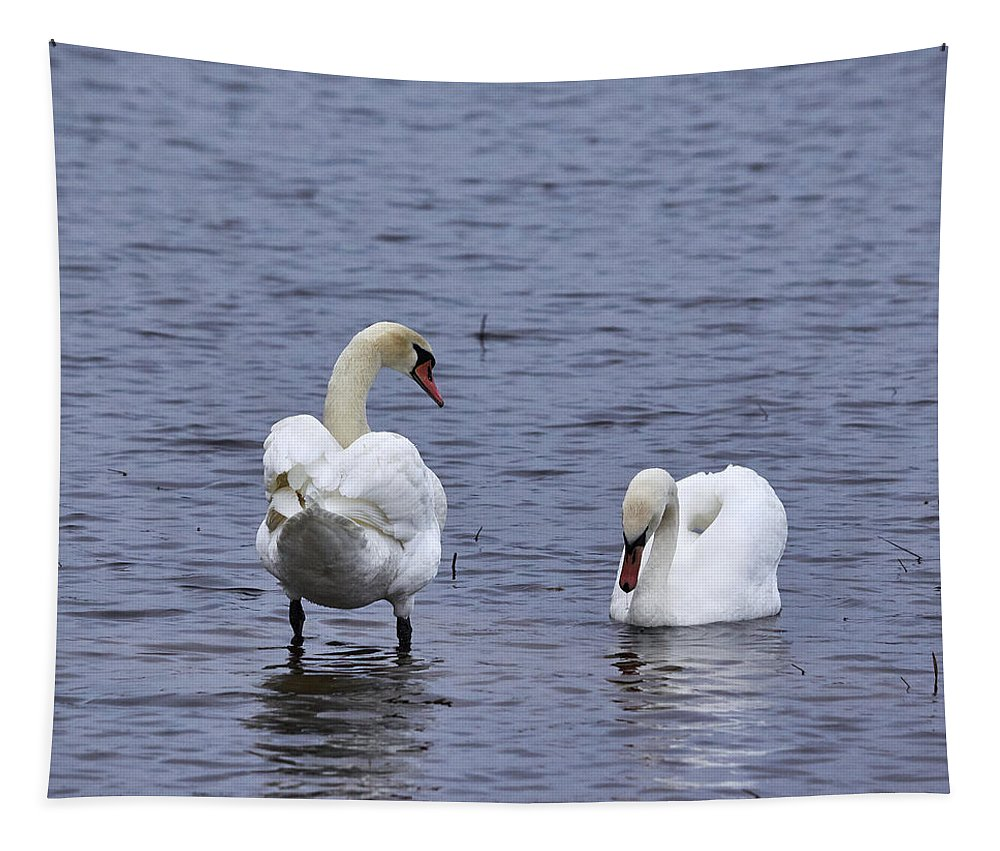 Finland Tapestry featuring the photograph At Your Service. Mute Swan by Jouko Lehto