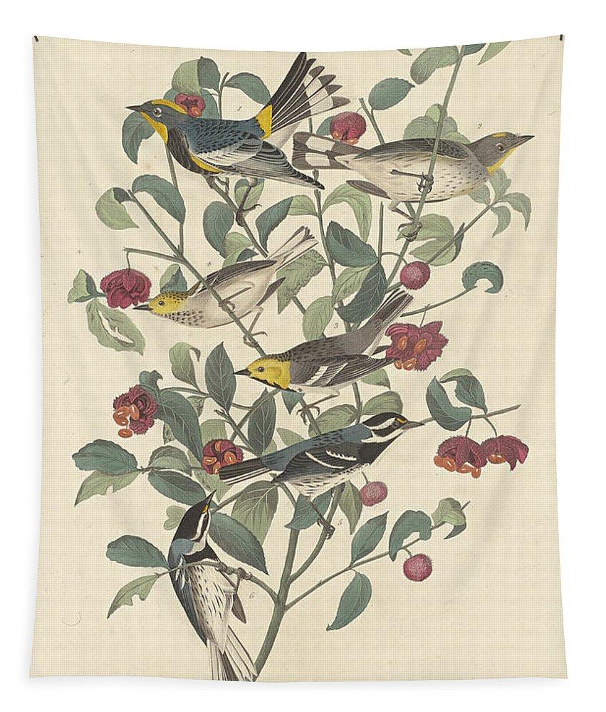 John James Audubon Tapestry featuring the painting Audubon's Warbler by John James Audubon