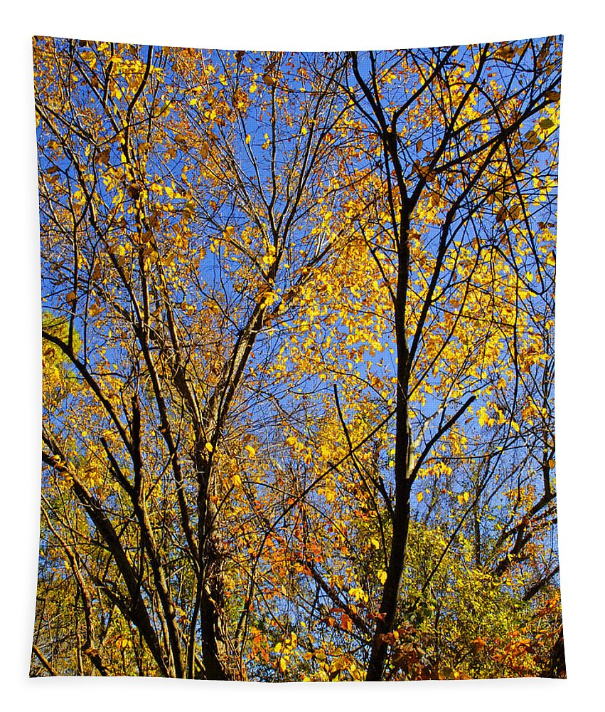 Fall Leaves Tapestry featuring the photograph Autumn Colors by Stephen Anderson