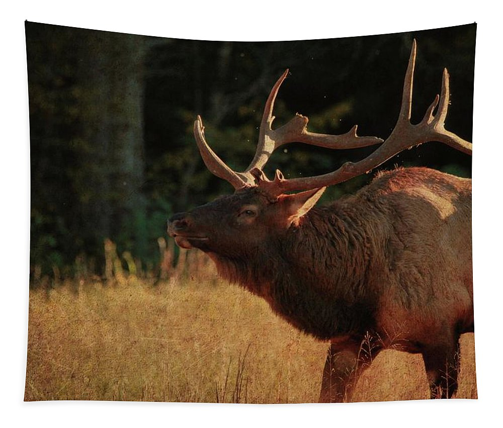 Autumn Elk In Cataloochee Valley Textured Tapestry featuring the photograph Autumn Elk In Cataloochee Valley Textured by Dan Sproul