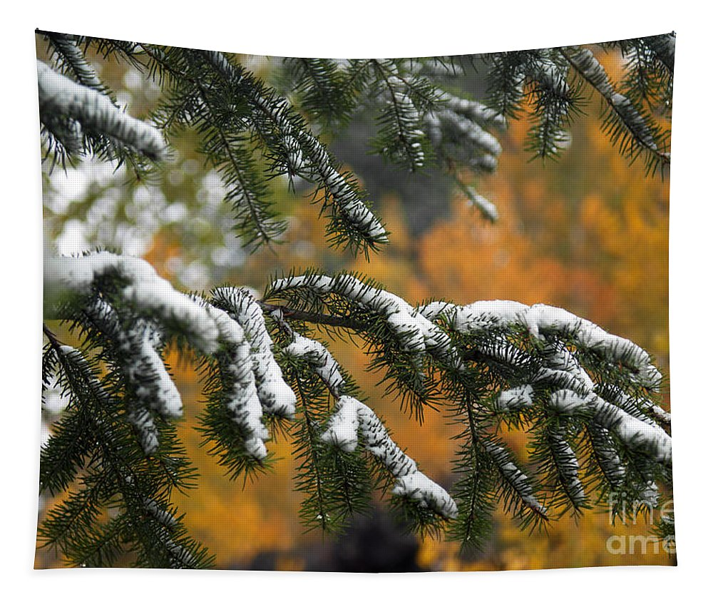 Autumn Tapestry featuring the photograph Autumn Foliage by Wildlife Fine Art