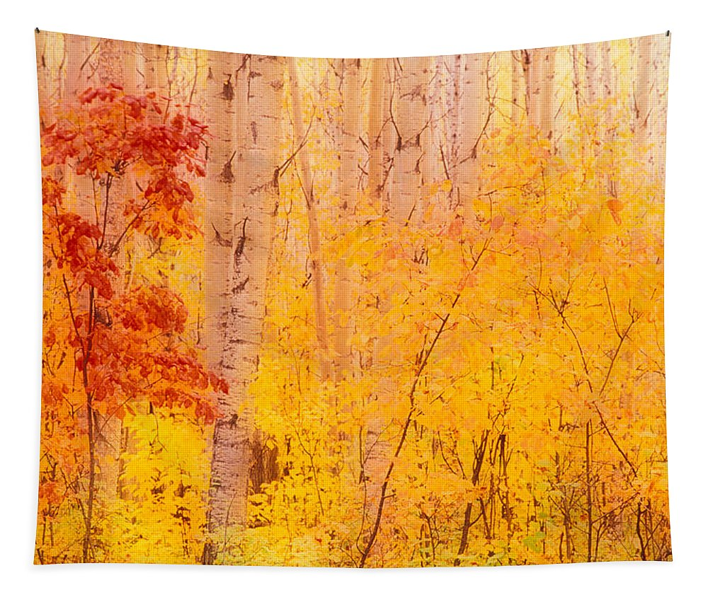 Photography Tapestry featuring the photograph Autumn Forest Wbirch Trees Canada by Panoramic Images