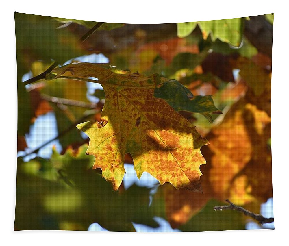 Linda Brody Tapestry featuring the photograph Autumn Leaves Macro 2 by Linda Brody