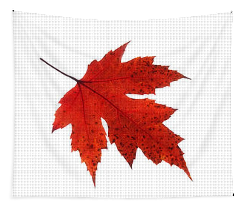 Autumn Leaves Triptych Tapestry featuring the photograph Autumn Leaves Triptych by Gill Billington