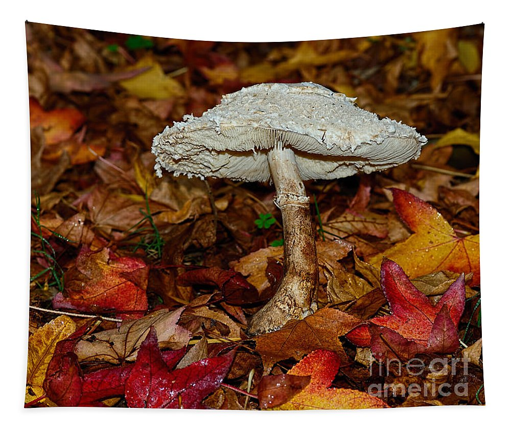 Autumn Mushroom Tapestry featuring the photograph Autumn Mushroom by Kaye Menner