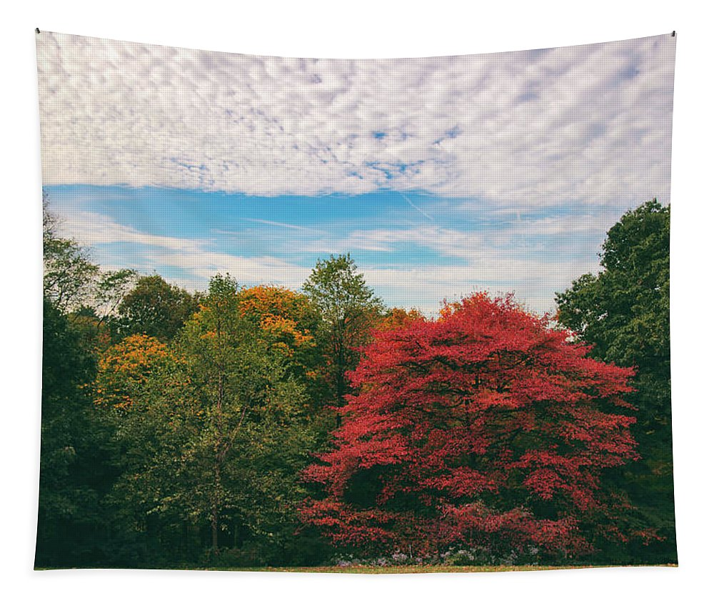 Autumn Tapestry featuring the photograph Autumn Skies by Jessica Jenney