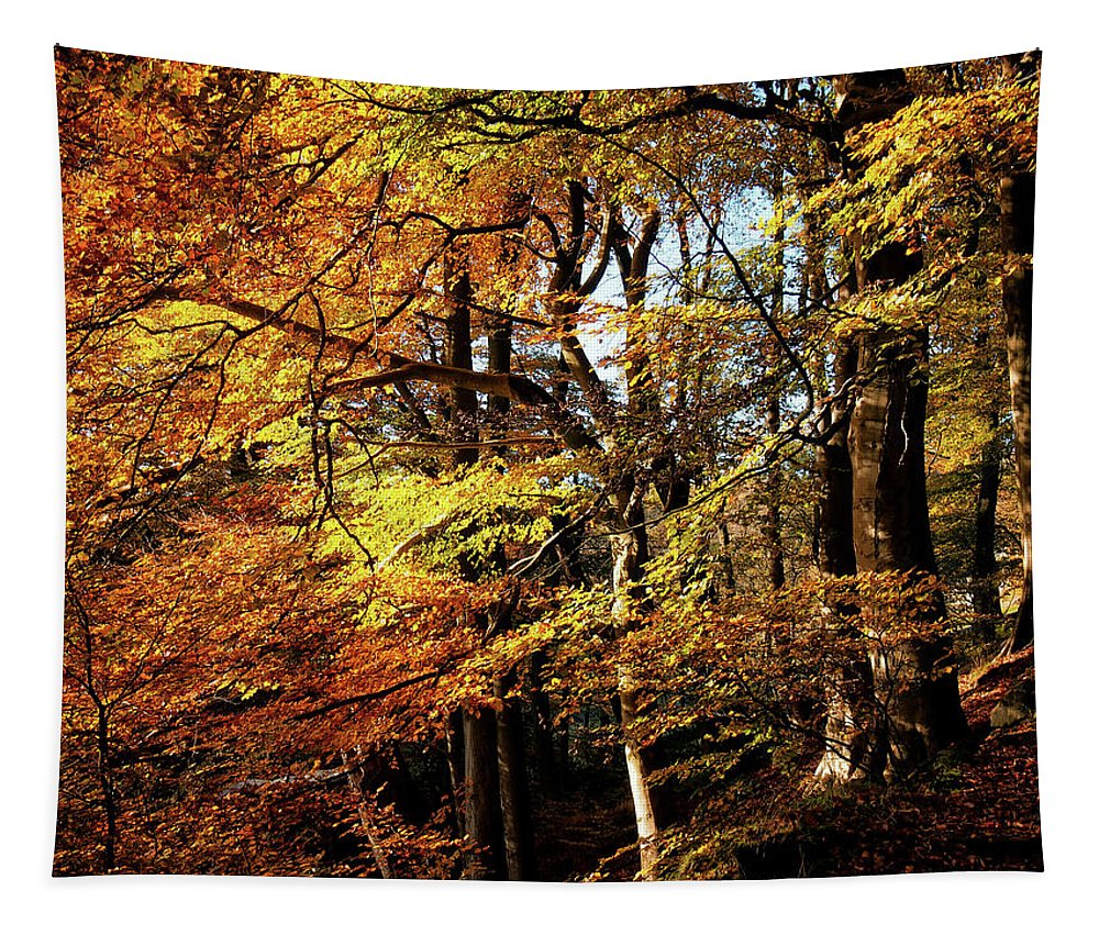 Autumn Tapestry featuring the photograph Autumn Hillside - Colden Valley by Philip Openshaw