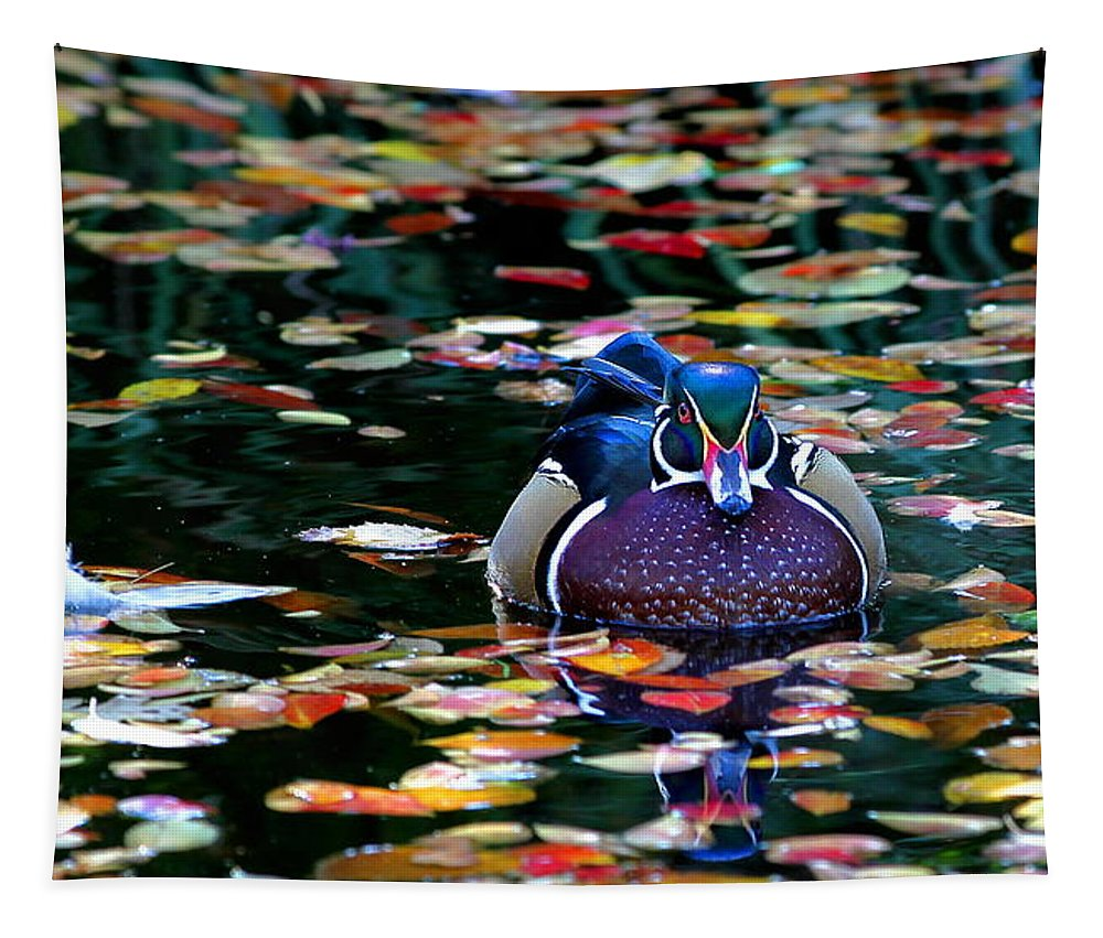 Wood Duck Tapestry featuring the photograph Autumn Wood Duck by Debi Dalio