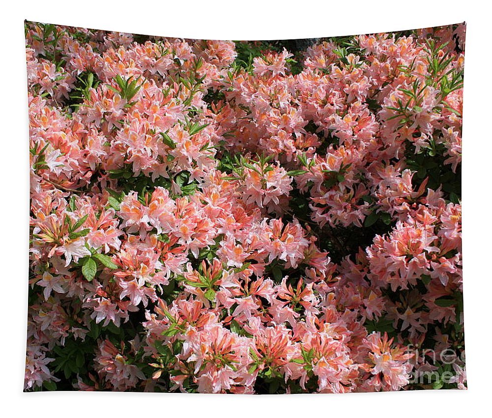 Azaleas Tapestry featuring the photograph Azalea Wall by Carol Groenen