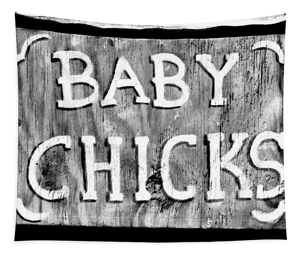 Baby Chicks Tapestry featuring the photograph Baby Chicks Bw by Pamela Critchlow