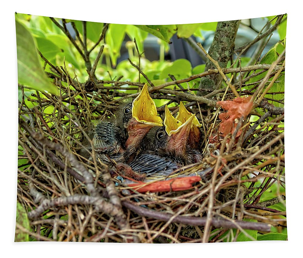 Mockingbird Tapestry featuring the photograph Baby Mockingbirds by Kay Brewer