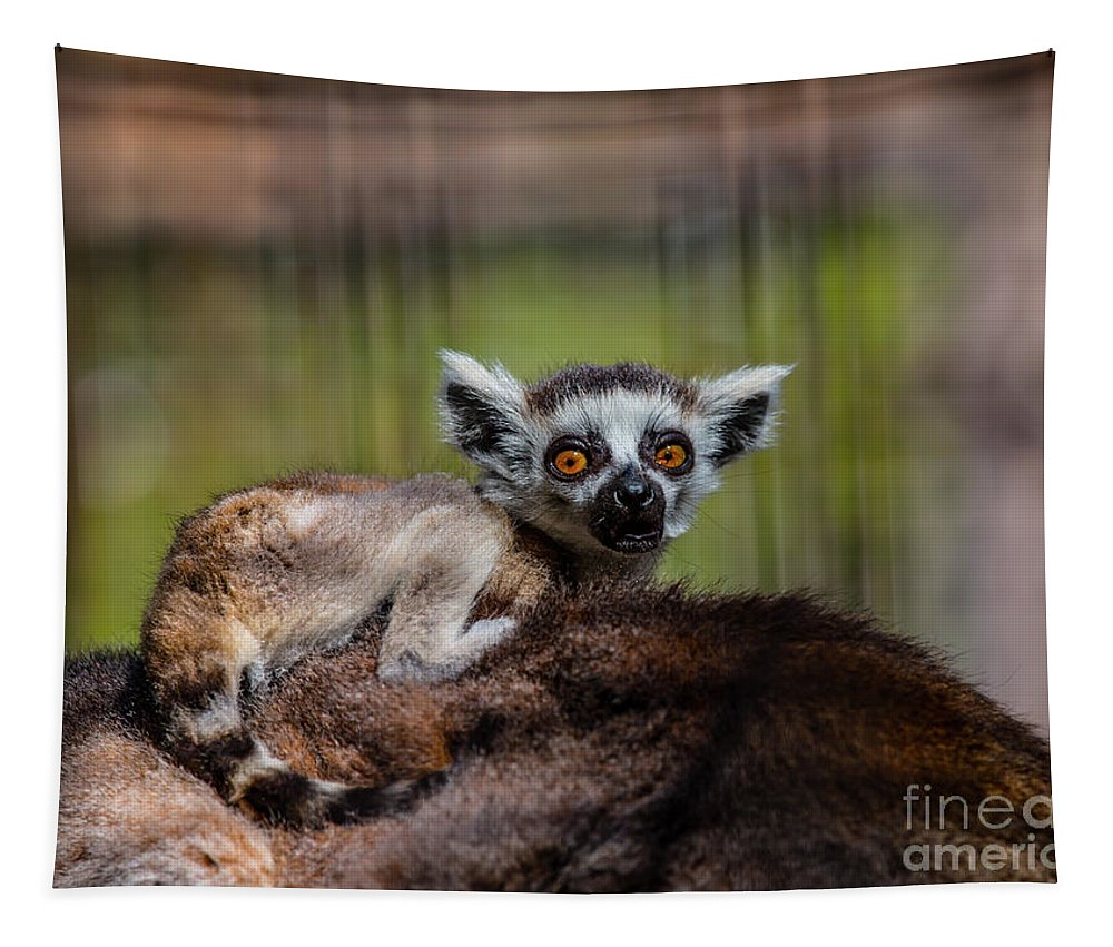 Lemur Tapestry featuring the photograph Baby Ring-tailed Lemur by CJ Park