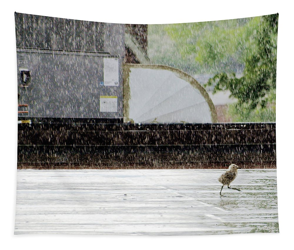 Animal Tapestry featuring the photograph Baby Seagull Running In The Rain by Bob Orsillo