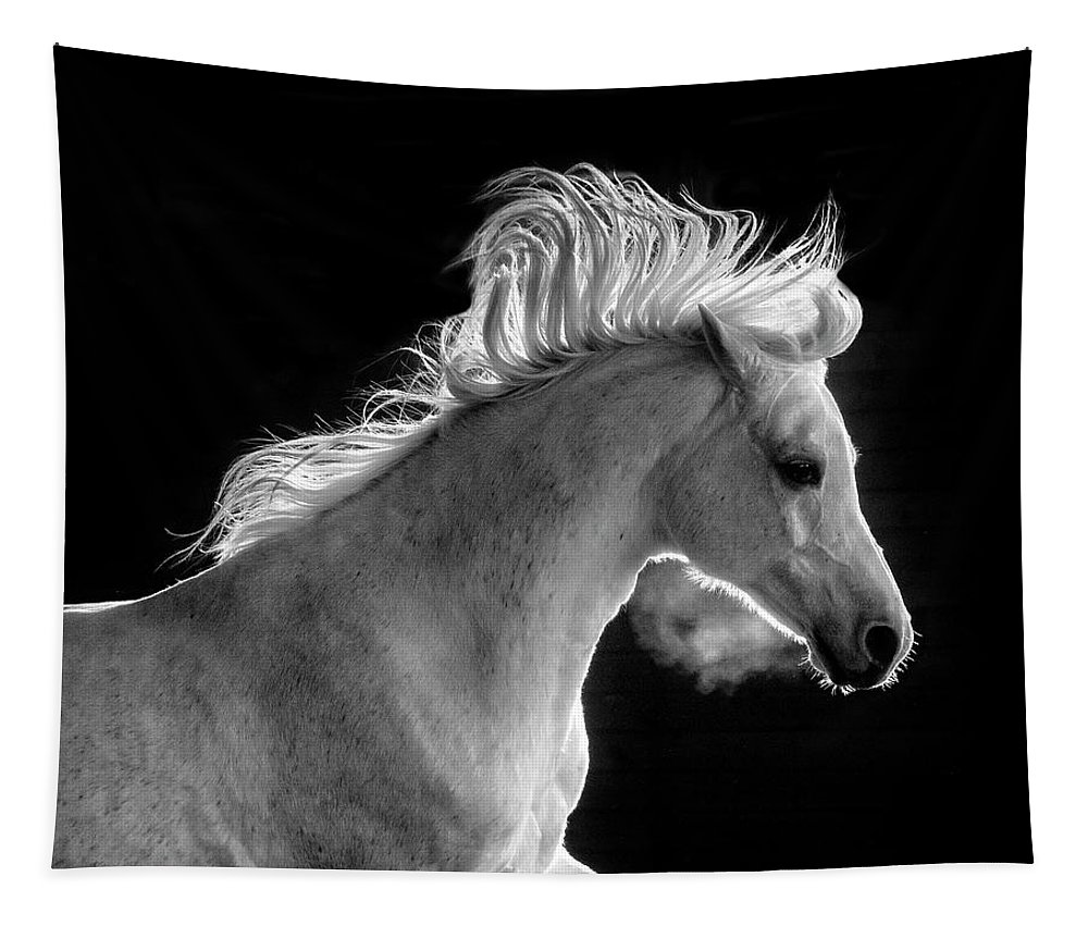 Backlit Arabian Tapestry featuring the photograph Backlit Arabian by Wes and Dotty Weber