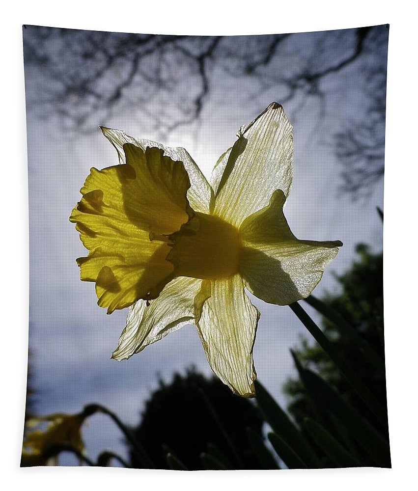 Daffodil Tapestry featuring the photograph Backlit Daffodil by Richard Brookes