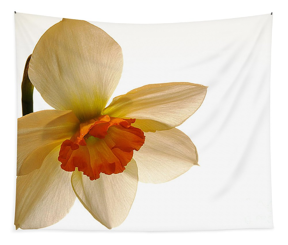 Jonquil Tapestry featuring the photograph Backlit Jonquil by Lois Bryan