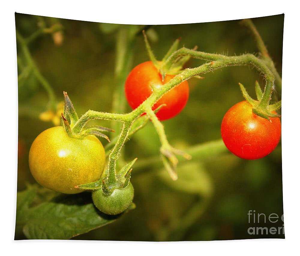 Food Tapestry featuring the photograph Backyard Garden Series - Cherry Tomatoes by Carol Groenen