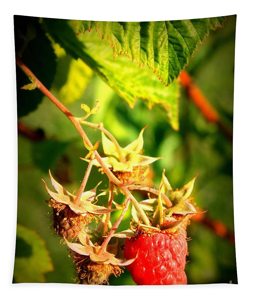 Fruits Tapestry featuring the photograph Backyard Garden Series - One Ripe Raspberry by Carol Groenen
