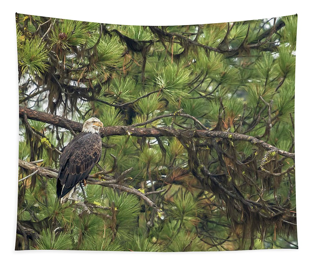 Bald Eagle Tapestry featuring the photograph Bald Eagle In A Pine Tree, No. 4 by Belinda Greb