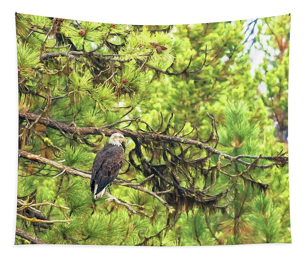Bald Eagle Tapestry featuring the photograph Bald Eagle In A Pine Tree, No. 5 by Belinda Greb