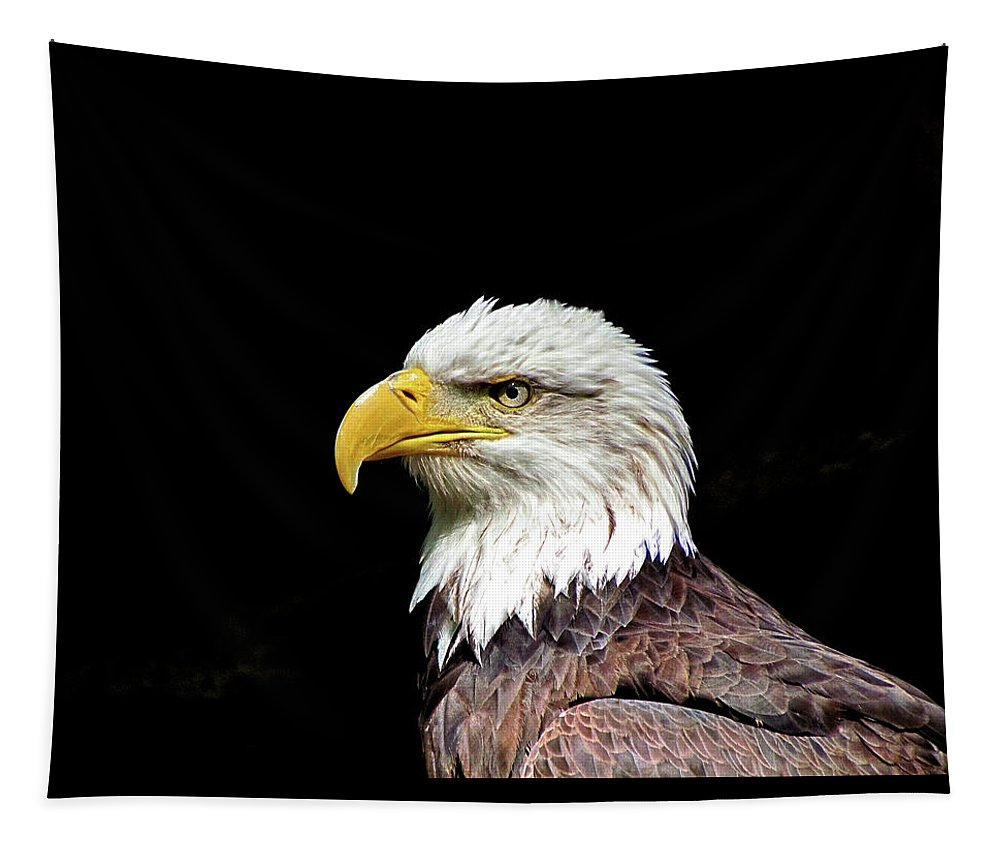 Animal Tapestry featuring the photograph Bald Eagle by John Trommer