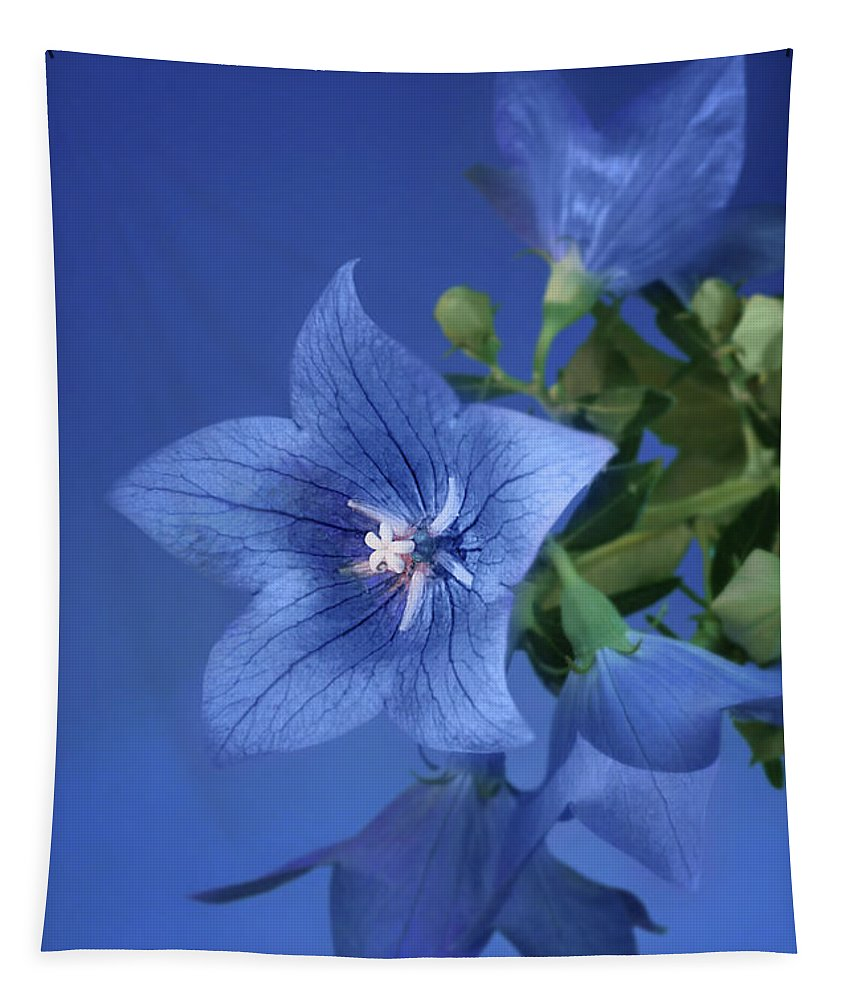 Flowers Tapestry featuring the photograph Balloon Flowers - Blooms And Buds by Nikolyn McDonald