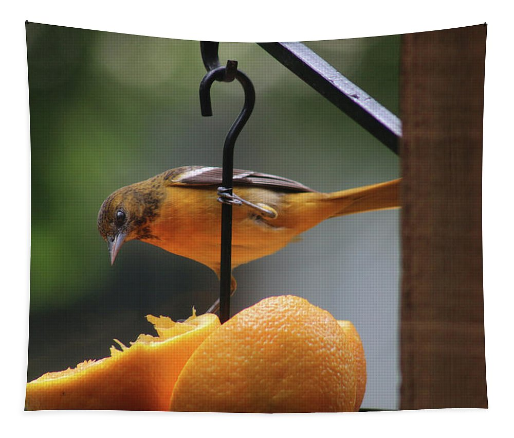Baltimore Oriole Tapestry featuring the photograph Baltimore Oriole by Michael Munster