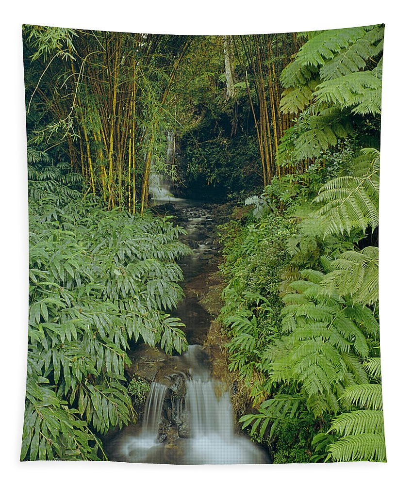 Bamboo Tapestry featuring the photograph 100837-bamboo And Ferns Creek by Ed Cooper Photography