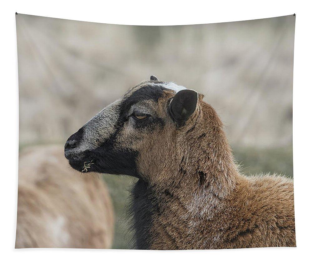Barbados Blackbelly Sheep Tapestry featuring the photograph Barbados Blackbelly Sheep Profile by Belinda Greb