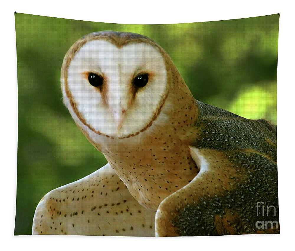 Barn Owl Tapestry featuring the photograph Barn Owl-6553 by Gary Gingrich Galleries