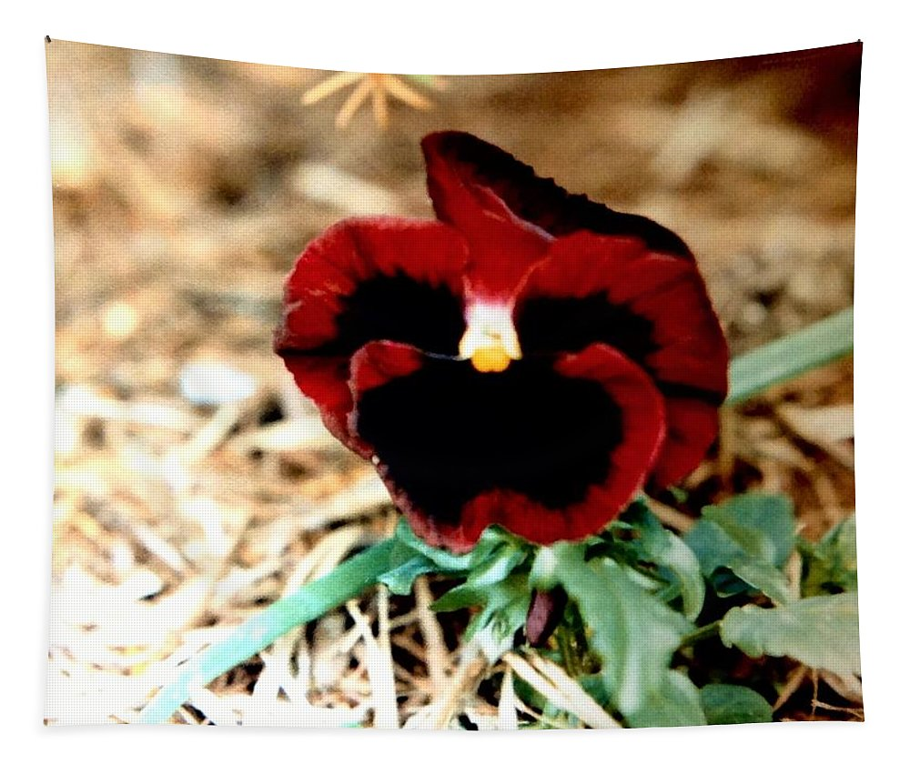 Dark Tapestry featuring the photograph Bashful Pansy by Debra Lynch