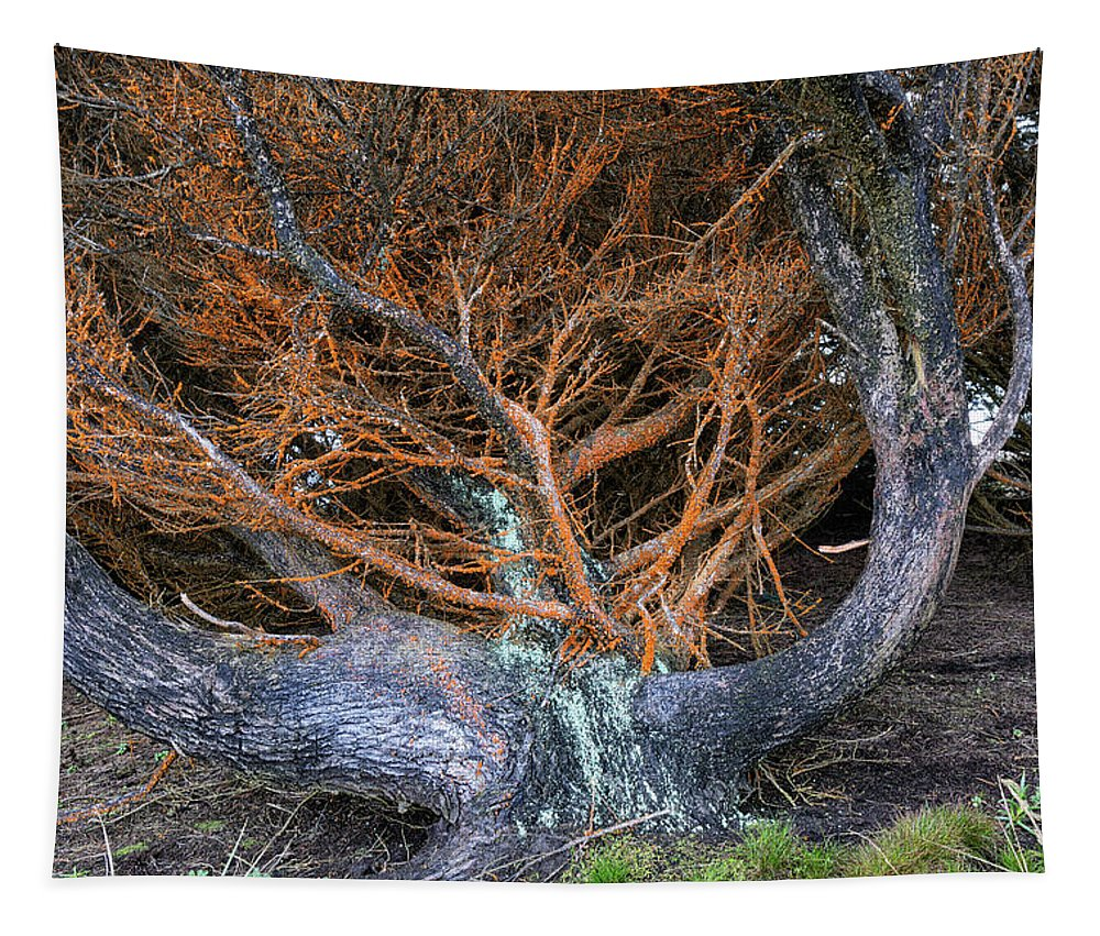Cypress Photographs Tapestry featuring the photograph Battered Cypress With Orange Alga by Kathleen Bishop